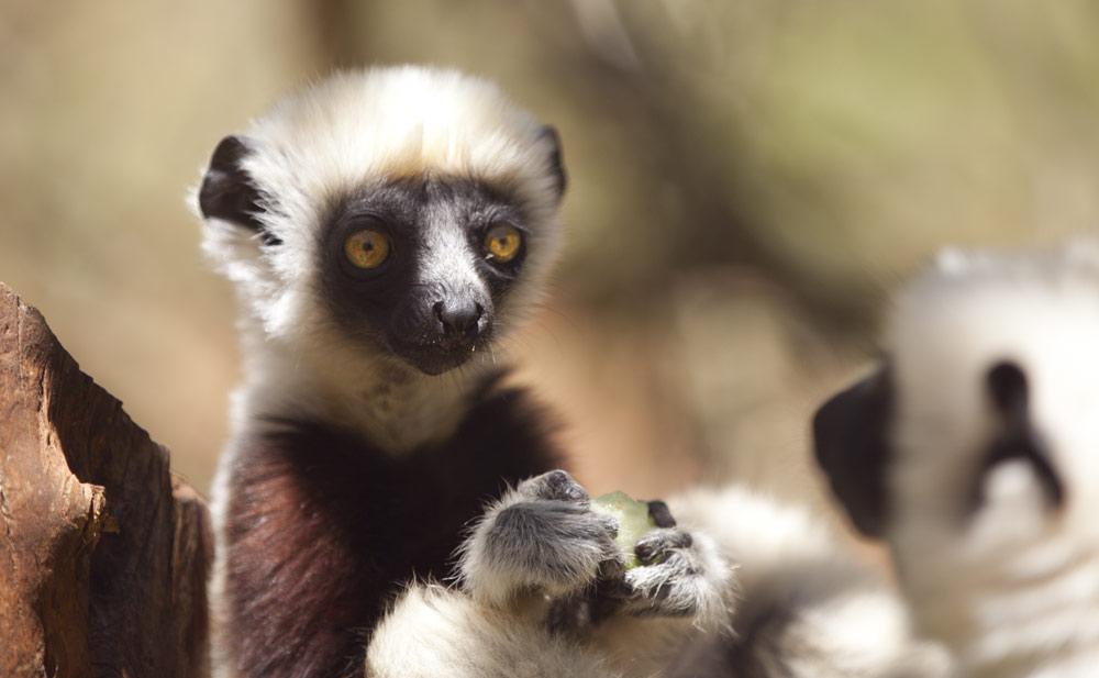 Madagascar Photos By Casey